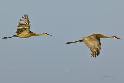 Photograph - Morning Flight by Mike Fitzgerald
