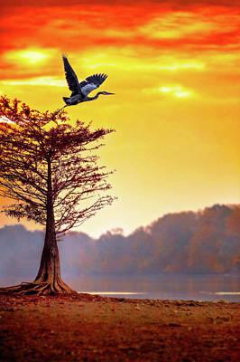 Photograph - Morning Flight by Steven Llorca