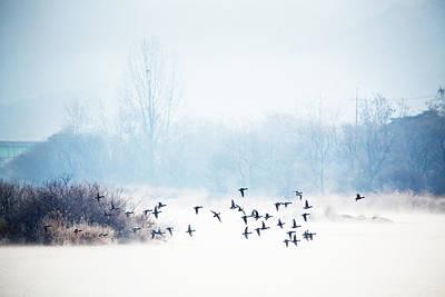 Y120831 Photograph - Morning Flight by TwinDaddy