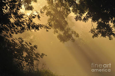 Photograph - Morning Fog by Sharon Talson