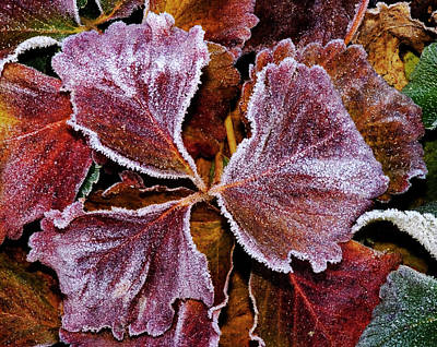 Photograph - Morning Frost  by Cliff Norton
