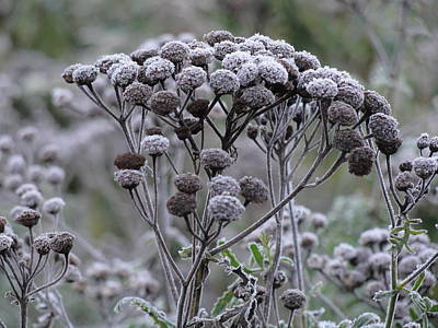 Art Print featuring the photograph Morning Frost by Tiffany Erdman