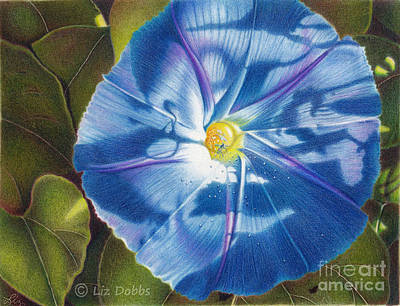 Painting - Morning Glory B by Elizabeth Dobbs