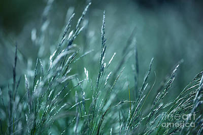 Blueish Photograph - Morning Grass by Gabriela Insuratelu
