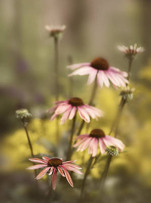 Cone Flower Photograph - Morning In The Garden by Rebecca Cozart