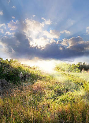 Photograph - Morning Light by Francesa Miller