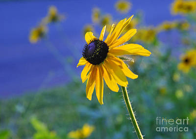 Art Print featuring the photograph Morning Light by Nava Thompson