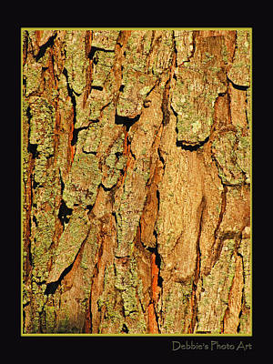 Photograph - Morning Light On Maple Tree Bark by Debbie Portwood