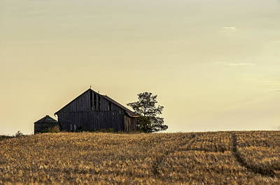 Photograph - Morning Light On Wheatfield by Alan Norsworthy