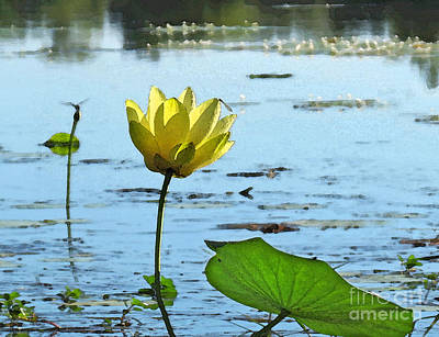 Art Print featuring the photograph Morning Lotus Pond by Deborah Smith
