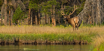 Bull Creek Photograph - Morning Majesty by Sandy Sisti