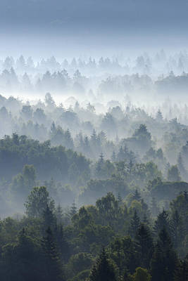 Bleached Tree Photograph - Morning Mist In Forest, Isar Valley, Wolfratshausen, Upper Bavaria, Bavaria, Germany by Martin Ruegner
