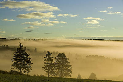 New Glasgow Photograph - Morning Mist Over Trees, New Glasgow by John Sylvester