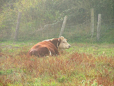 Photograph - Morning Moo by Wendy McKennon