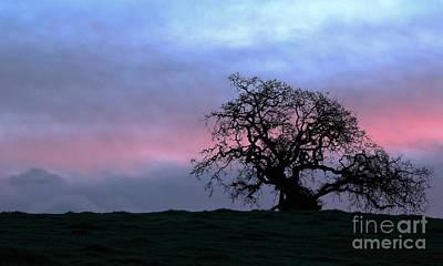 Morning Oak Art Print by Daniel Ryan