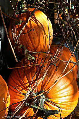Photograph - Morning Pumpkins by Susan Herber