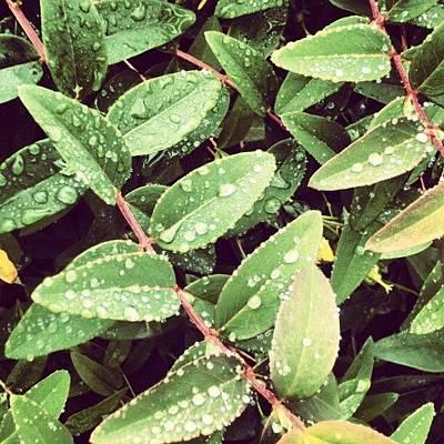 Raindrops Photograph - #morning #raindrops #rainy #random by Abdelrahman Alawwad