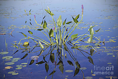 Art Print featuring the photograph Morning Reflection by Eunice Gibb