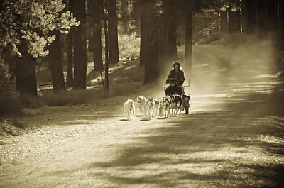 Photograph - Morning Run 3 by Sherri Meyer