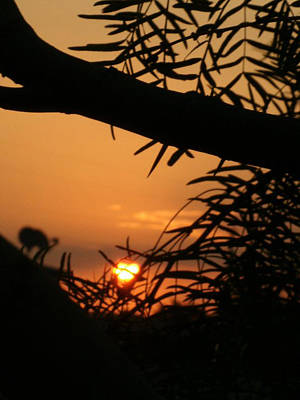 Art Print featuring the photograph Morning Sun And Mesquite by Louis Nugent