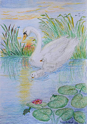 Lilly Pond Drawing - Morning Swim I  Original Colored Pencil Drawing by Debbie Portwood