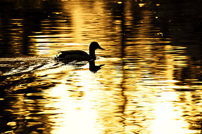 Photograph - Morning Swim by Rick Berk