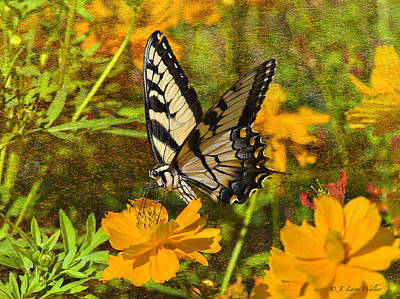 Digital Art - Morning Tiger Swallowtail by J Larry Walker