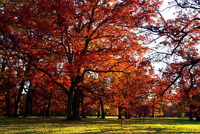 Morton Arboretum In Colorful Fall Art Print by Paul Ge