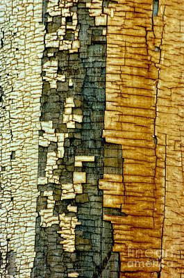 Fort Bayard Photograph - Mosaic Of Time by Vicki Pelham