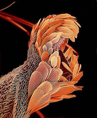 Mosquito Balance Organ, Sem Art Print by Susumu Nishinaga