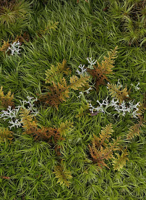 Photograph - Moss And Lichen by Daniel Reed