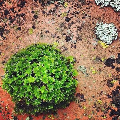 Surface Photograph - Moss And Lichen by Nic Squirrell