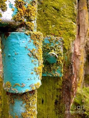 Photograph - Moss Gate by KD Johnson