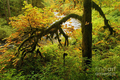 Photograph - Moss In The Forest by Adam Jewell