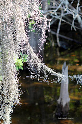 Photograph - Moss Point by Deborah Hughes