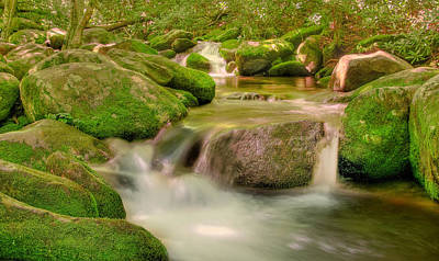 Art Print featuring the photograph Mossy Beauty by Cindy Haggerty