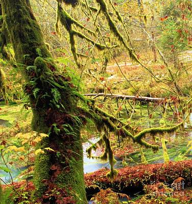 Photograph - Mossy Bend by Adam Jewell