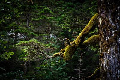 Mossy Branch Original by Adam Pender