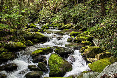 Photograph - Mossy Creek by Ronald Lutz