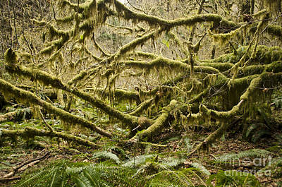 Photograph - Mossy by Heather Applegate