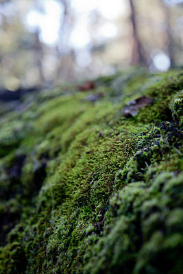 Photograph - Mossy Log by Carole Hinding