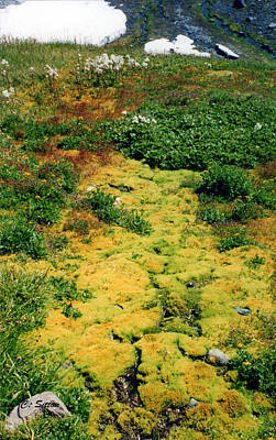 Photograph - Mossy Trail by C Sitton