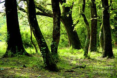 Digital Art - Mossy Trees by Sami Sarkis