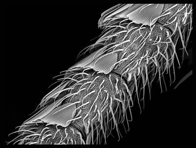 Sem Digital Art - Moth Antennae  by Sheri  Neva