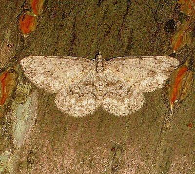 Moth Art Print by Bruce Carpenter
