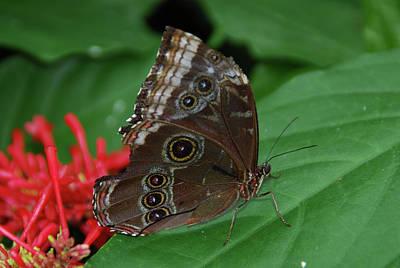 Photograph - Moth I 2403 by Guy Whiteley