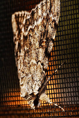Moth Art Print by Linda Tiepelman
