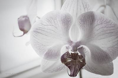 Photograph - Moth Orchid  by Shehan Wicks