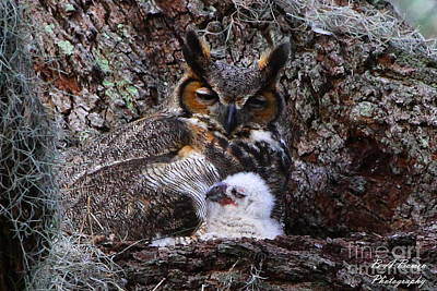 Mother And Baby Owl Art Print by Barbara Bowen