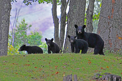 Photograph - Mother And Cubs by Alan Lenk